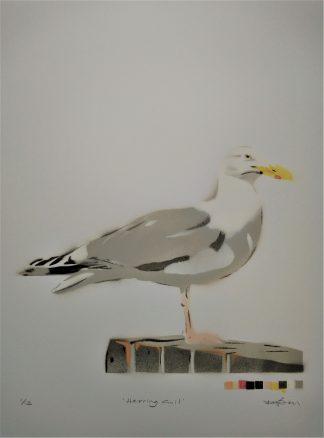 herring gull artwork