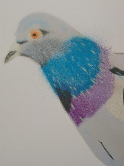 pigeons head with all the coloured layers